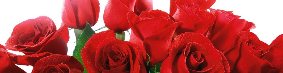 san_valentino_rose_rosse